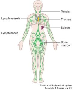 Lymphatic System - Cancer Treatment